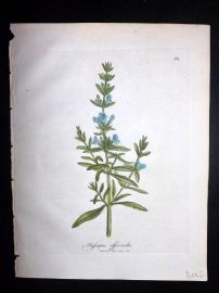 Woodville 1810 Hand Col Botanical Print. Hyssopus officinalis. Hyssop 113